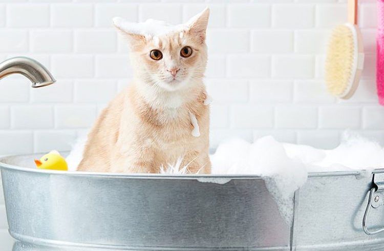 Protect your Cat from Fleas with Shampoo